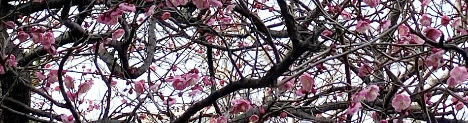 季節感素材画像_3月用